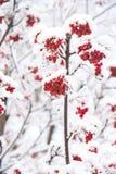 Concepto de la Navidad o del Año Nuevo Fotografía de archivo