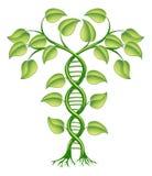 Concepto de la planta de la DNA Foto de archivo libre de regalías