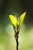 Concepto de la primavera imagen de archivo