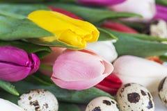 Concepto de la primavera y de Pascua Imagen de archivo