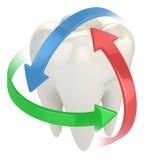 Concepto de la protección 3d de los dientes Fotos de archivo libres de regalías