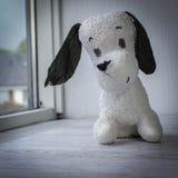 Concepto de la protección animal El perro-juguete espera al dueño Fotos de archivo libres de regalías