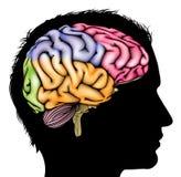 Concepto de la silueta del cerebro Imagen de archivo libre de regalías