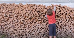 Concepto de la tala de árboles Producción de madera Fondo del combustible Leña para el incendio doméstico Problemas ecológicos So fotos de archivo libres de regalías
