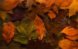 Concepto de la textura del fondo Fondo del otoño, visión a través del vidrio mojado en la madera y hojas caidas Gotas del agua o  Fotos de archivo