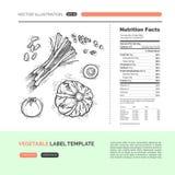 Concepto de la verdura del vector Fotos de archivo libres de regalías