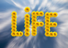 Concepto de la vida Fotos de archivo