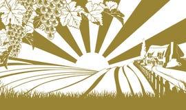 Concepto de las colinas de la vid de uva del viñedo Foto de archivo libre de regalías