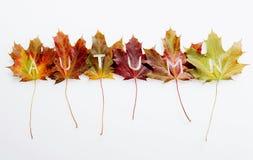 Concepto de las hojas de otoño con el texto Imágenes de archivo libres de regalías