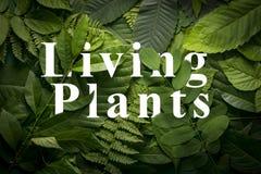 Concepto de las plantas vivas de follaje verde salvaje de la selva Foto de archivo libre de regalías