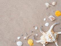 Concepto de las vacaciones de verano y de las vacaciones Seashells en la arena Mar summ imágenes de archivo libres de regalías