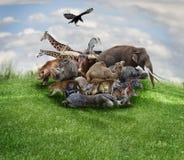 Concepto de los animales fotos de archivo