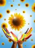Concepto de Sunfower Imágenes de archivo libres de regalías
