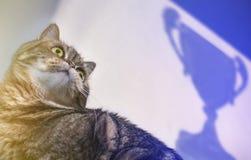 Concepto de Tabby Win Success gato en un fondo de una taza victoriosa imagen de archivo