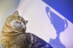 Concepto de Tabby Win Success gato en un fondo de una taza victoriosa Foto de archivo