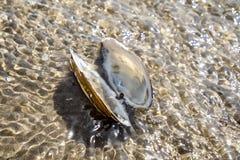 Concepto de tiempo de la playa del día de fiesta del destino del viaje con un mejillón en el agua Imagenes de archivo