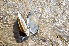 Concepto de tiempo de la playa del día de fiesta del destino del viaje con un mejillón en el agua Foto de archivo libre de regalías