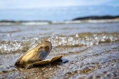 Concepto de tiempo de la playa del día de fiesta del destino del viaje con un mejillón en el agua Fotos de archivo libres de regalías