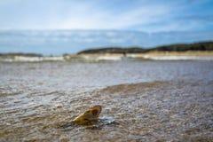 Concepto de tiempo de la playa del día de fiesta del destino del viaje con un mejillón en el agua Fotos de archivo