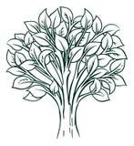 Concepto del árbol Fotografía de archivo
