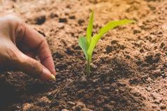 Concepto del almácigo por la mano humana, semilla sembrada humana en suelo Foto de archivo