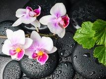 Concepto del balneario de blanco con la flor roja de la orquídea Fotografía de archivo libre de regalías