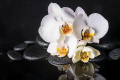 Concepto del balneario de blanco hermoso con la orquídea amarilla (phalaenopsis) Imagen de archivo