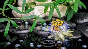 Concepto del balneario de flor de la pasionaria, ramas verdes, toallas, zen b Foto de archivo