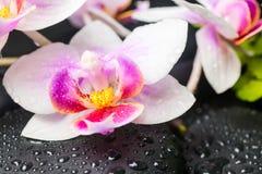 Concepto del balneario de flor y de piedras hermosas de la orquídea con descensos Imagen de archivo libre de regalías