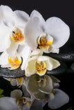 Concepto del balneario de orquídea blanca (phalaenopsis), ZENES Stone con descenso Foto de archivo libre de regalías