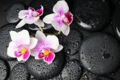 Concepto del balneario de orquídea hermosa (phalaenopsis) y de ZENES Stone Imágenes de archivo libres de regalías
