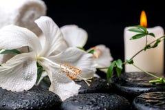 Concepto del balneario del hibisco blanco delicado floreciente, ramita verde con Imagenes de archivo