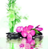 Concepto del balneario Flor y piedras Foto de archivo libre de regalías