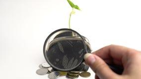 Concepto del banco de las finanzas del negocio de dinero, monedero con la planta creciente, crecimiento del árbol del dinero, mo metrajes