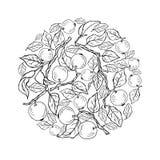 Concepto del círculo con las ramas del manzano Foto de archivo
