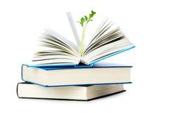 Concepto del conocimiento con los libros Imagen de archivo
