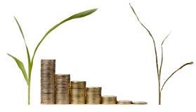 Concepto del crecimiento de dinero Foto de archivo libre de regalías