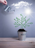 Concepto del crecimiento del árbol Foto de archivo libre de regalías