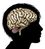 Concepto del desarrollo del cerebro Fotografía de archivo libre de regalías
