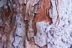 Concepto del fondo del modelo del árbol de corteza Fotos de archivo libres de regalías