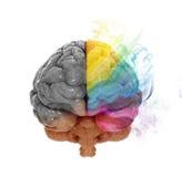 Concepto del hemisferio cerebral de la creatividad Fotos de archivo