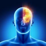Concepto del hemisferio izquierdo Fotografía de archivo libre de regalías