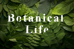 Concepto del jardín botánico de follaje salvaje de la selva Fotos de archivo libres de regalías
