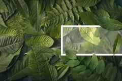 Concepto del jardín botánico de follaje salvaje de la selva Fotografía de archivo