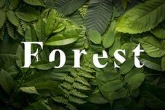 Concepto del jardín botánico de follaje salvaje de la selva Imágenes de archivo libres de regalías