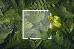 Concepto del jardín botánico de follaje salvaje de la selva Fotografía de archivo libre de regalías