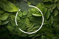 Concepto del jardín botánico de follaje salvaje de la selva Foto de archivo libre de regalías