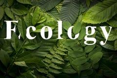 Concepto del jardín botánico de follaje salvaje de la selva Imagen de archivo