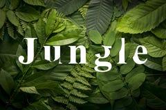 Concepto del jardín botánico de follaje salvaje de la selva Imagenes de archivo