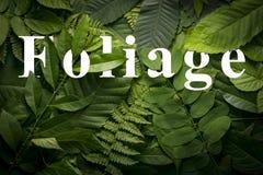Concepto del jardín botánico de follaje salvaje de la selva Fotos de archivo